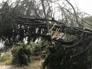 倒木により倒壊した電気引込ポールの復旧のご依頼をいただきました。