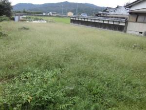 大津市のお客様から草刈りのご用命をいただきました。