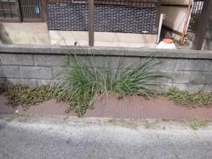 栗東市のお客様より、空家の草刈りのご依頼をいただきました。