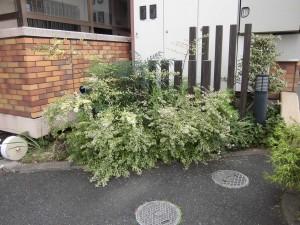 栗東市のマンションオーナー様より、マンション周りの木々の剪定のご依頼をいただきました。
