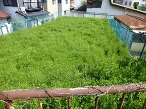 草津市の事業所様より、定期除草のご依頼をいただきました。