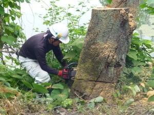 草津市の工場様より、枯れ木伐採のご依頼をいただきました。