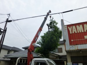 草津市のお客様より庭木伐採のご依頼をいただきました。