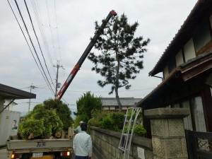 草津市のお客様より、庭木の伐採のご依頼をいただきました。