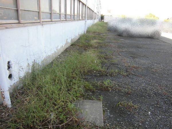 事業所様の定期除草をさせていただきました。