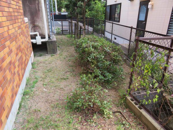 マンションの周囲の木々の剪定や除草のご依頼をいただきました。