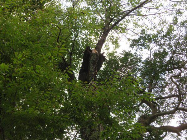 神社様の木の剪定をさせていただきました。