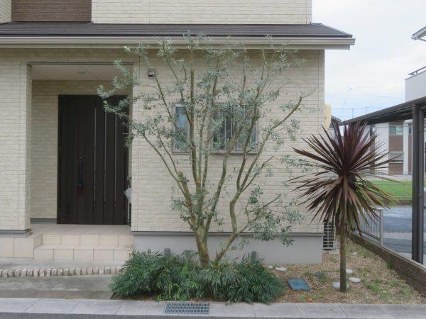 庭木の剪定のご依頼をいただきました。