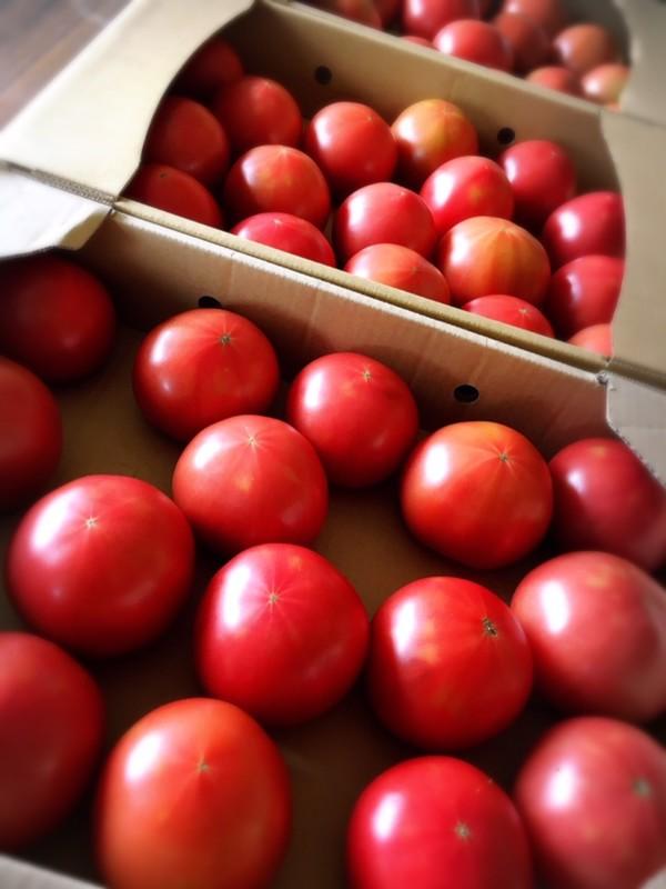 甘~いトマト お届けに参ります♪